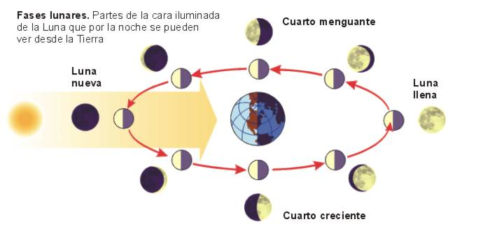 Energía Lunar: trabaja con ella ~ Fases de la Luna